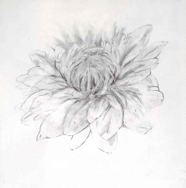 White-Chrysanthemum-Juan Vaquerizo